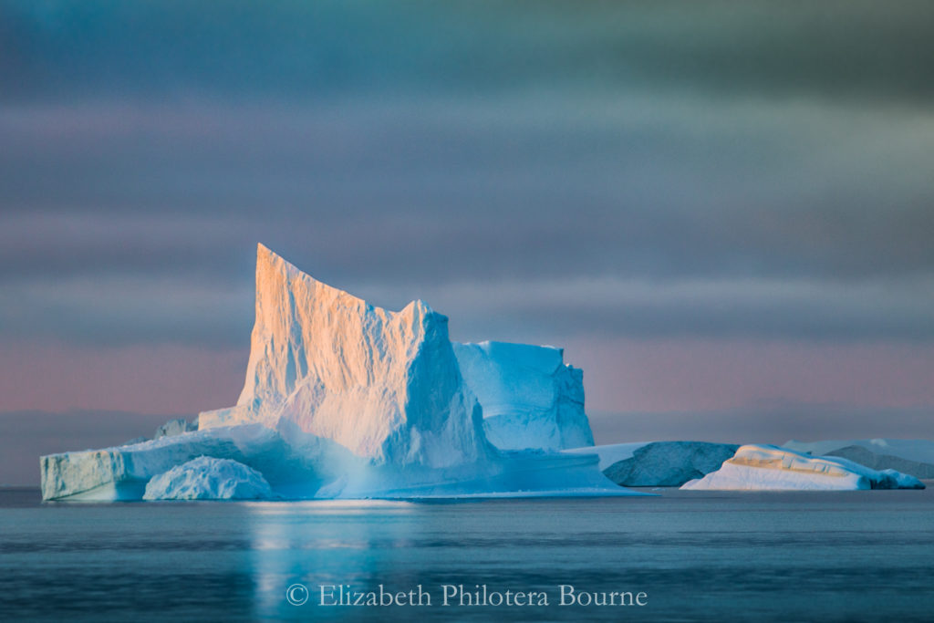 Iceberg with blue shadows and pink sunset reflections floating in serene water
