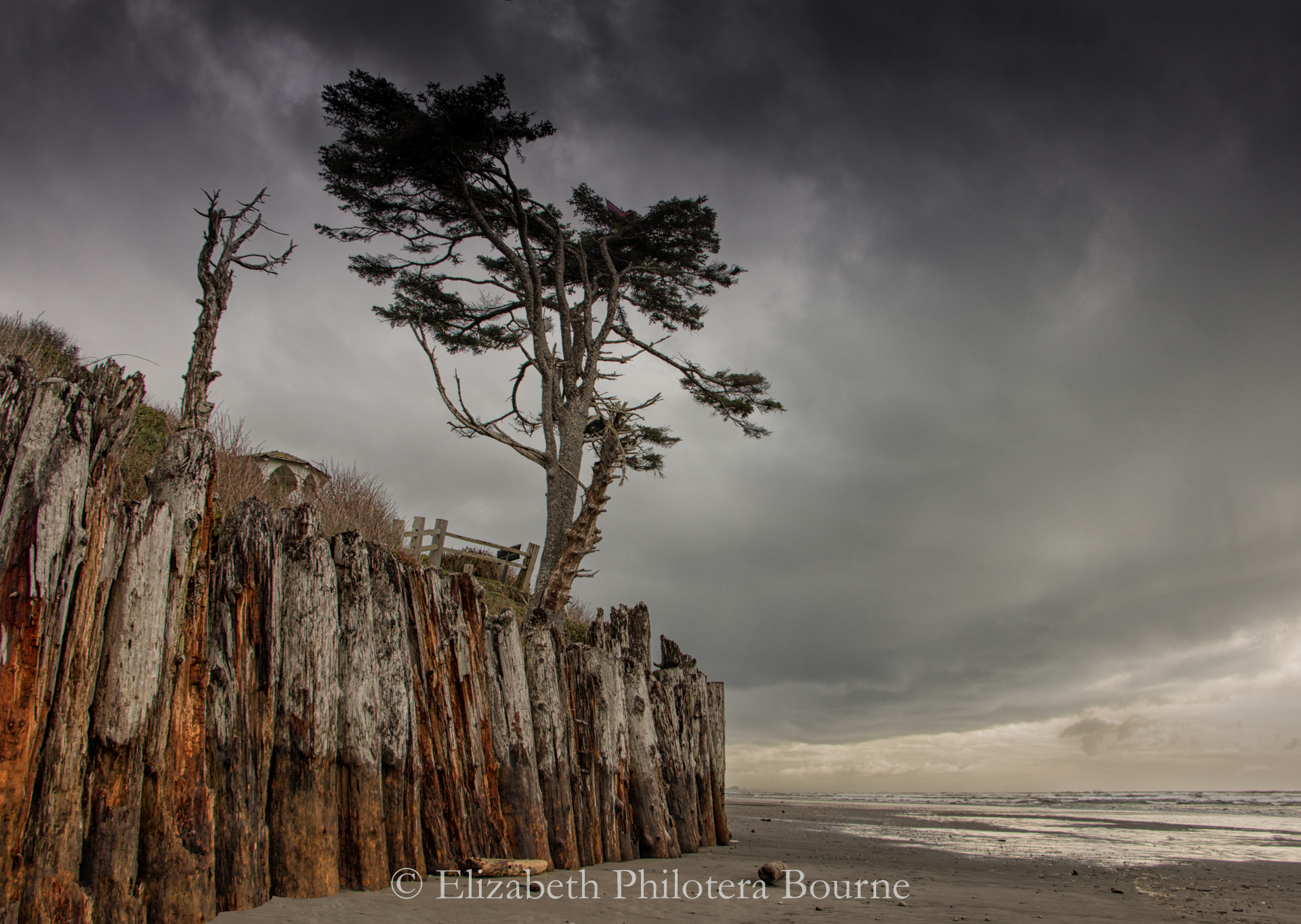wooden barricade with single tree on beach in approaching storm