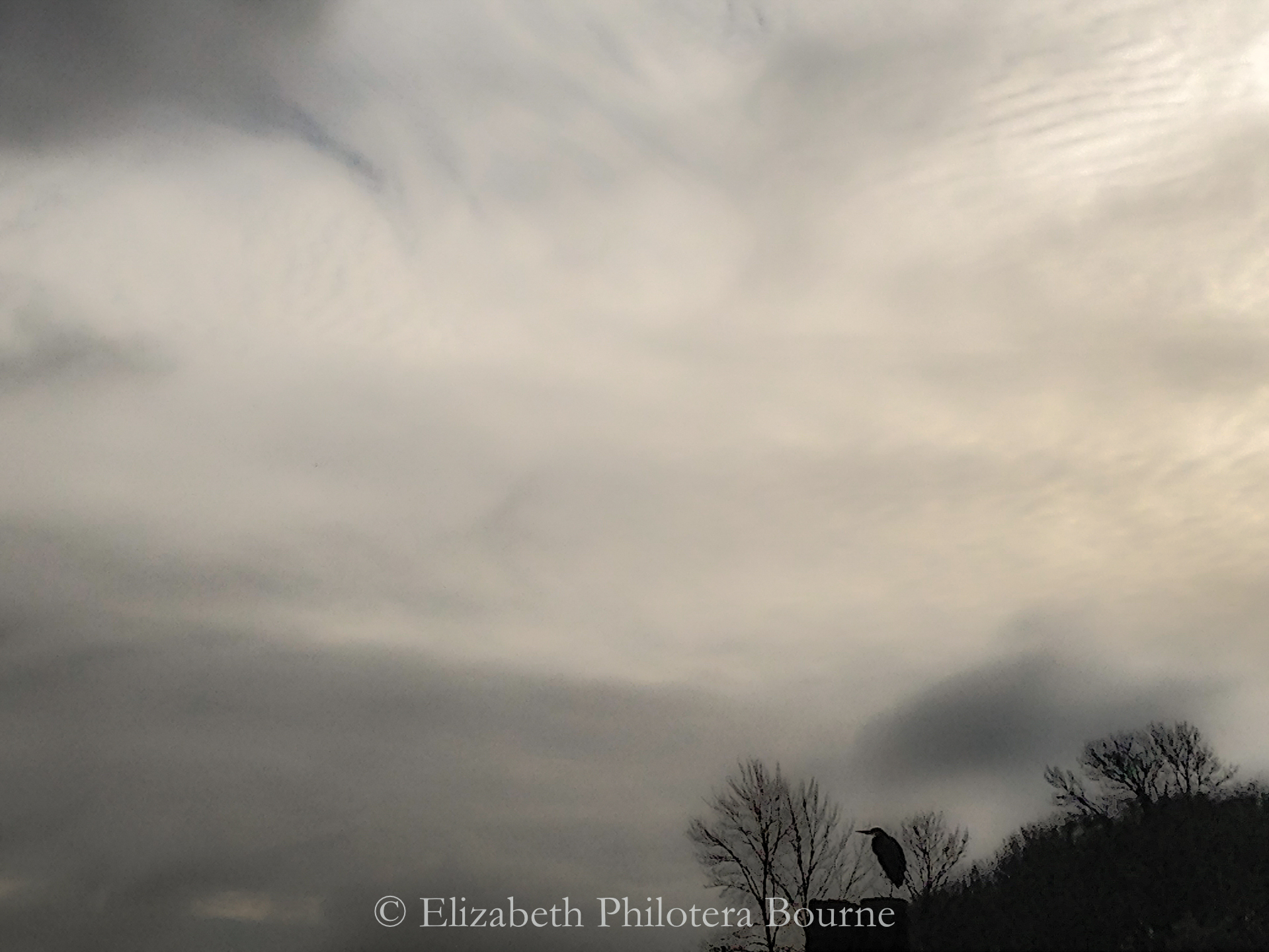 silhouoette of heron against a pearl and gray clouds