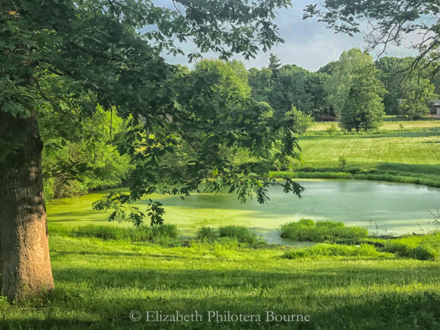 green landscape with trees, grass, and green pond