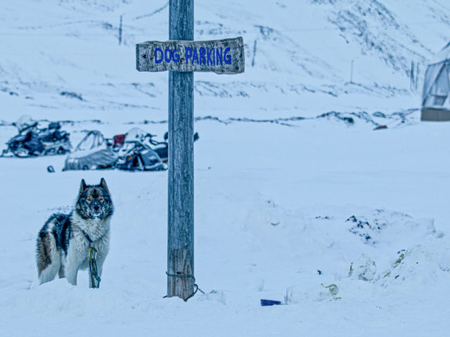post for dog parking with a sled dog tied to it in a snowy field in Longyearbyebn