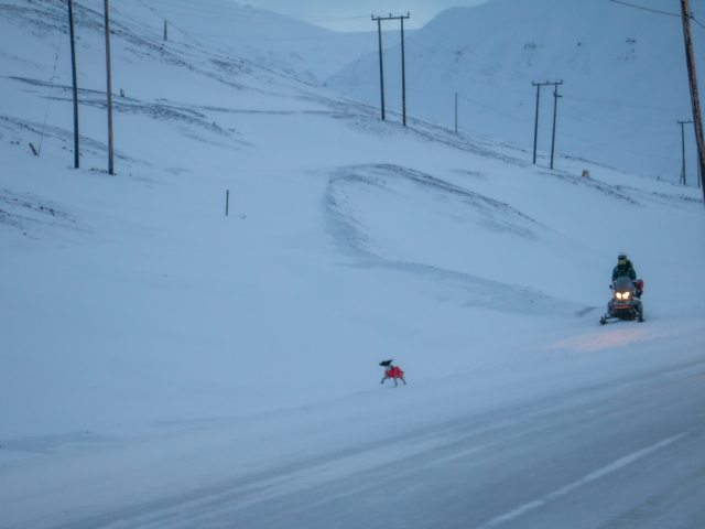Small dog in a red coat runs in front of its master who is on a snowmobile during the blue season in Svalbard